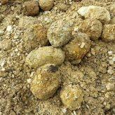 Подходы специалистов «ПРО Евразия» к подготовке песков к обогащению
